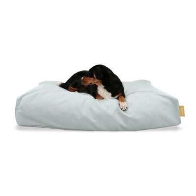 BUDDY Bett für Hunde Farbe Mint mit Momo Appenzeller Sennenhund